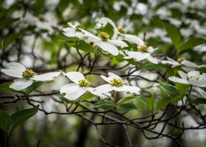 Meadowlark Botanical Garden Flowers