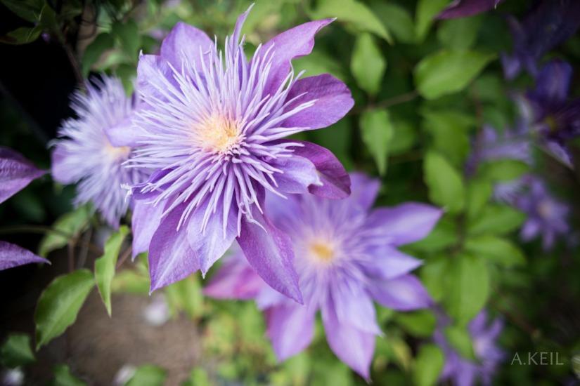 Meadowlark Botanical Gardens, April2015