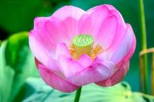 Kenilworth-Aquatic-Gardens-20150816-SAM_4917_8_9_tonemapped_tonemapped
