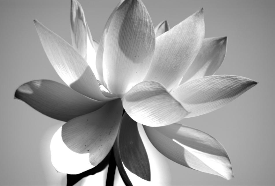 Kenilworth-Aquatic-Gardens-20150816-SAM_4920_1_2_3_4_5_tonemapped_tonemapped