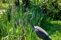 Kenilworth-Aquatic-Gardens-20150816-SAM_5145_6_7_tonemapped