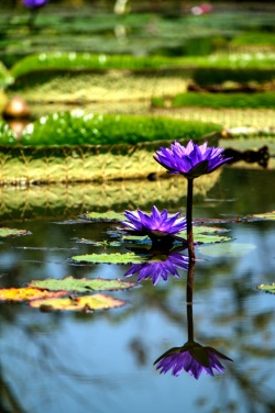 Kenilworth-Aquatic-Gardens-20150816-SAM_5294_5_6_tonemapped_tonemapped
