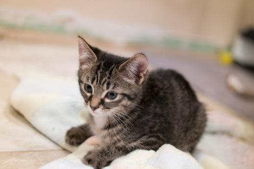 kitty-20151003-9270