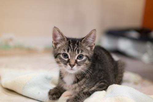 kitty-20151003-9272