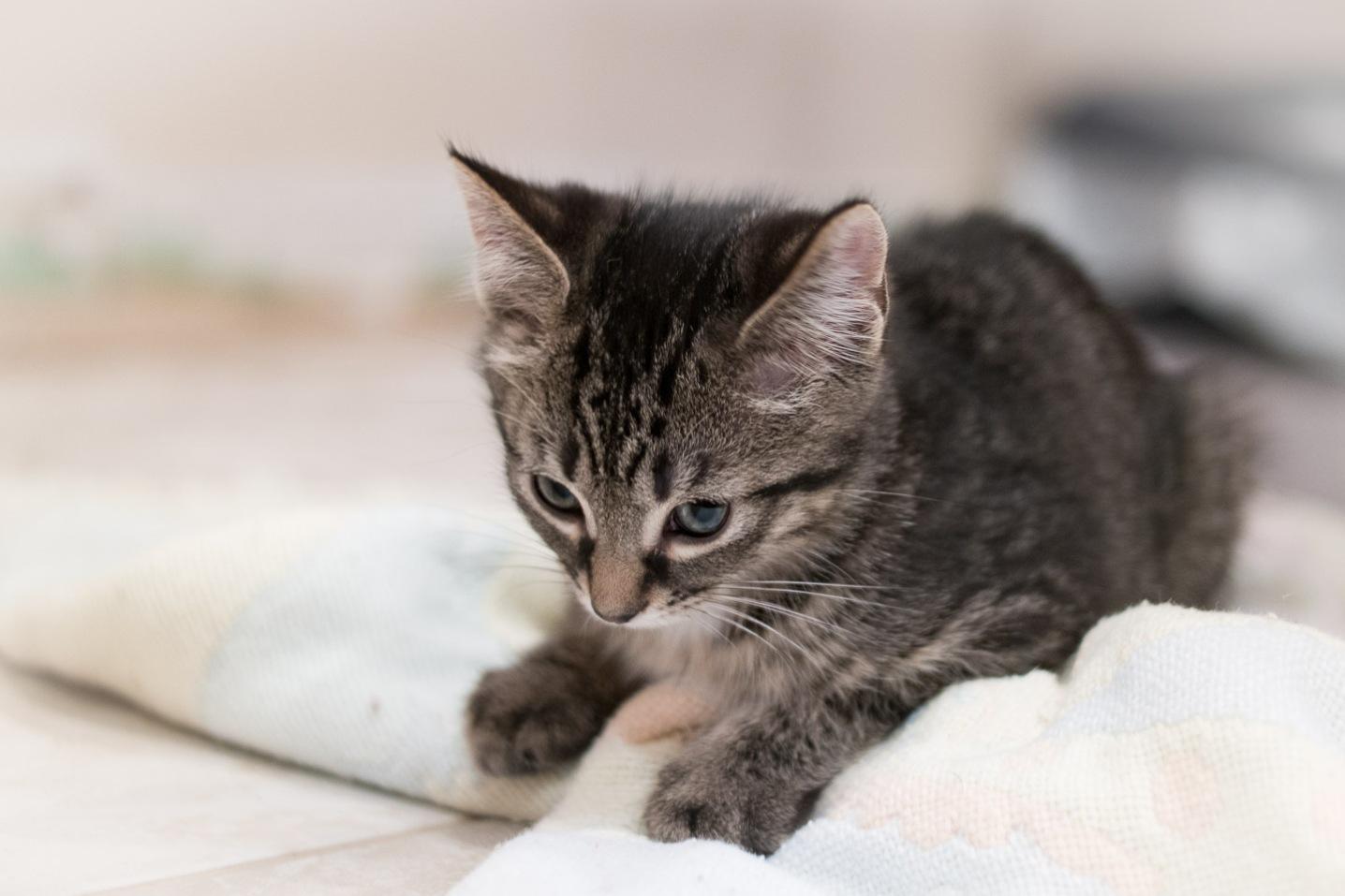 kitty-20151003-9273