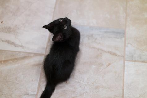 kitty-20151003-9293