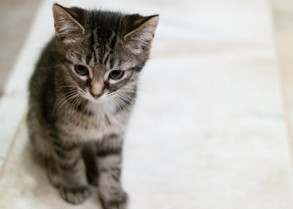 kitty-20151003-9307