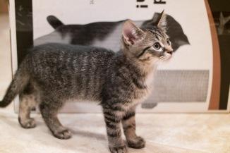 kitty-20151003-9311