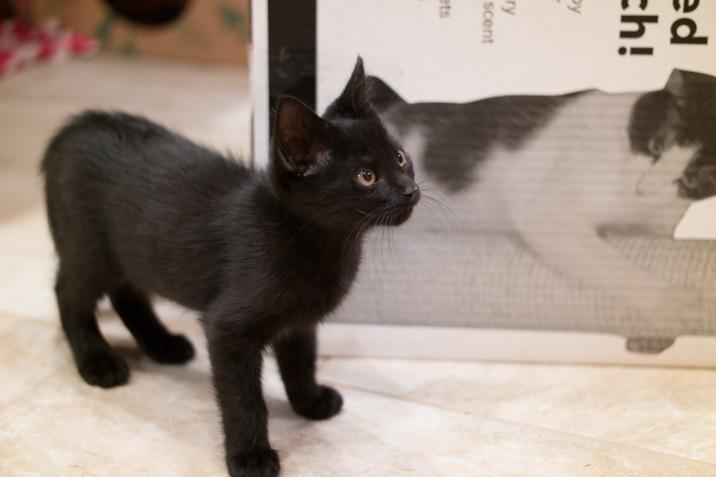 kitty-20151003-9313