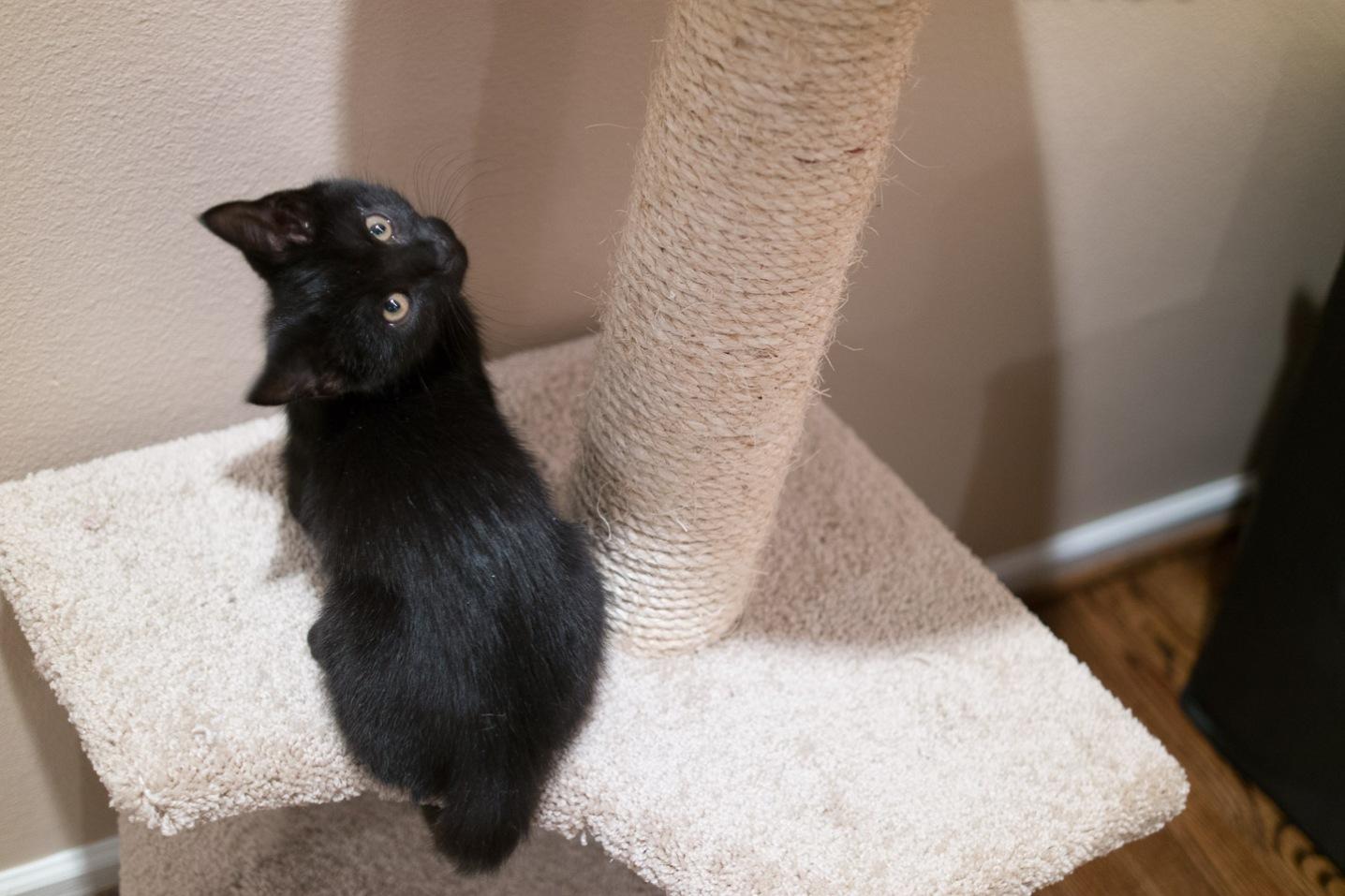 kitty-20151010-9544
