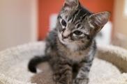 kitty-20151010-9555