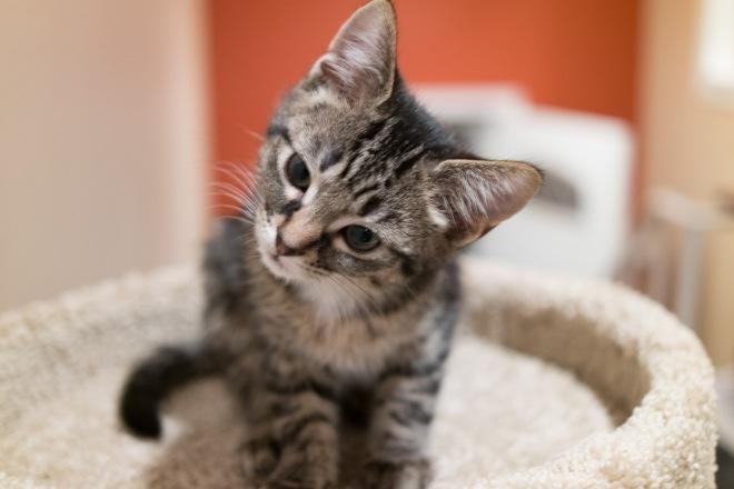 kitty-20151010-9556