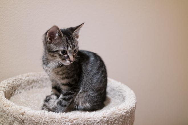 kitty-20151010-9560