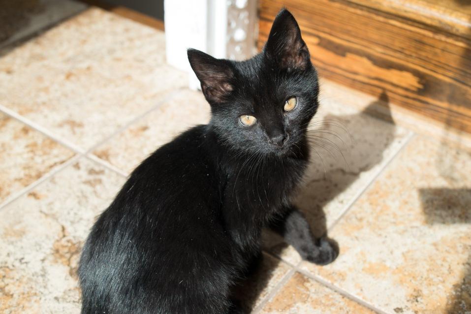 kitty-20151017-0976