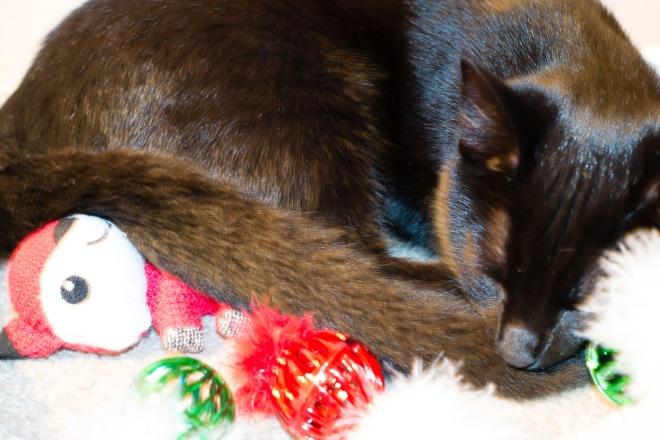kitty-20151224-3608