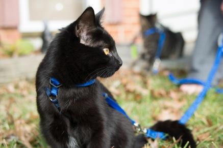 kitty-20151227-3663