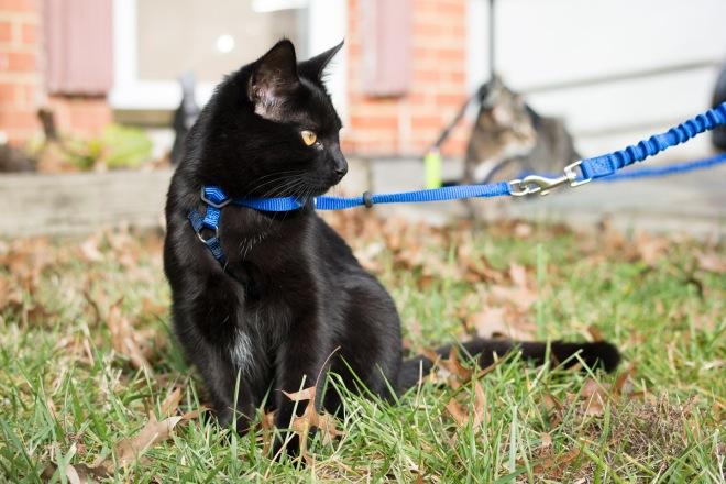 kitty-20151227-3666