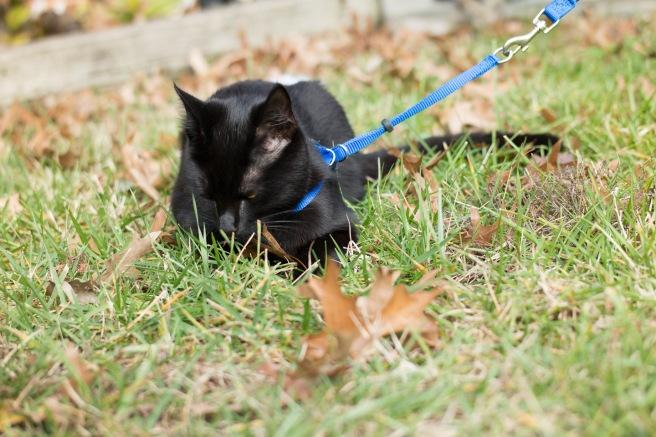 kitty-20151227-3669