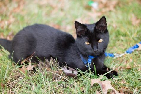 kitty-20151227-3680