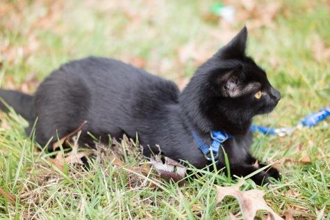 kitty-20151227-3681