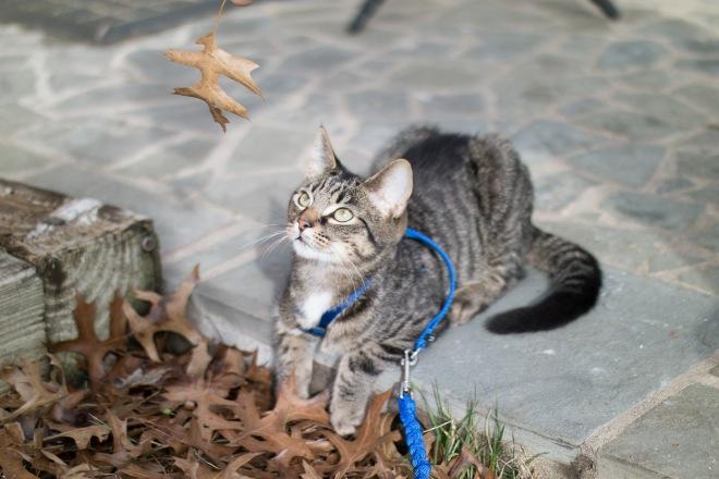 kitty-20151227-3684