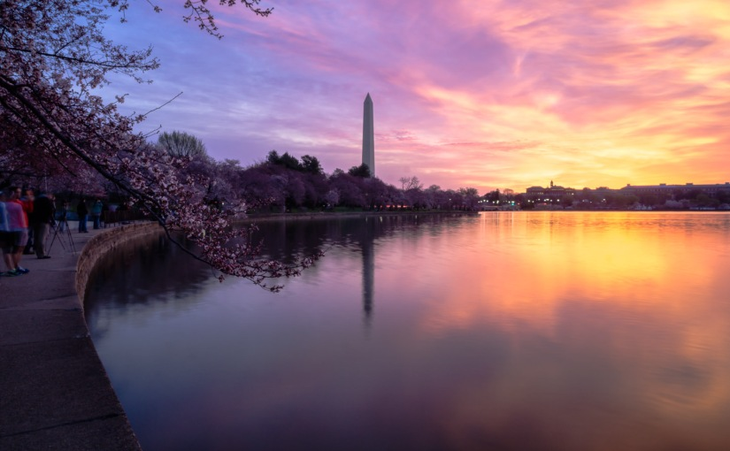 How to Capture the Cherry Blossom Festival in DC