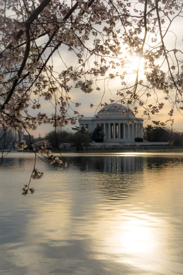 Cherry-Blossom-DC-Tidal-Basin-20160323-_DSC2622