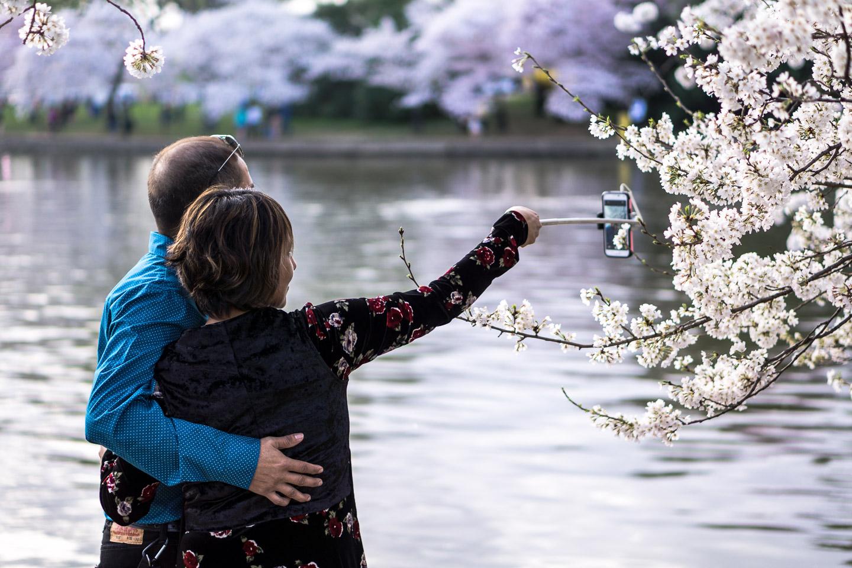 Cherry-Blossom-DC-Tidal-Basin-20160325-_DSC2784