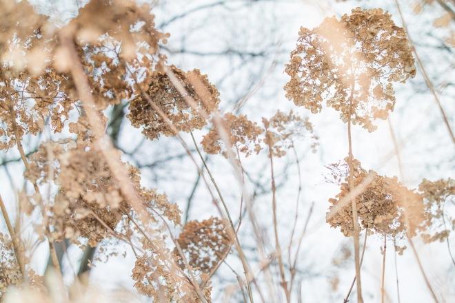 Meadowlark Gardens-20151222-_SAM3588