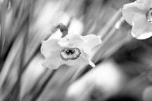 Meadowlark-Botanical-Gardens-20160424-_DSC4378-2