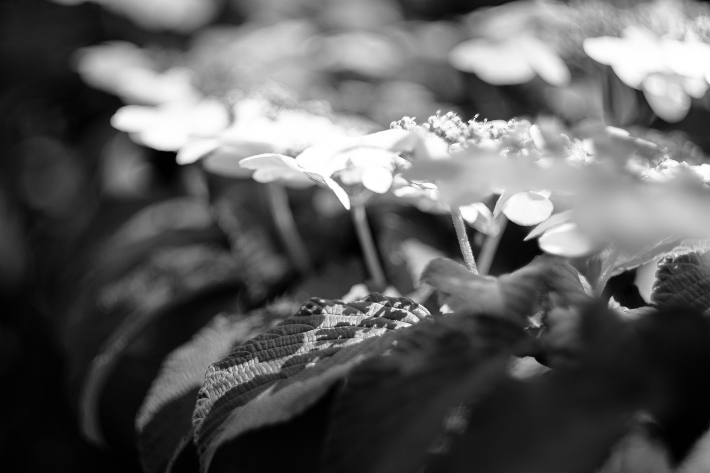 Meadowlark-Botanical-Gardens-20160424-_DSC4584-3