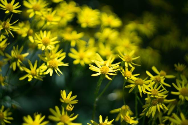 Meadowlark-Botanical-Gardens-20160424-_DSC4590
