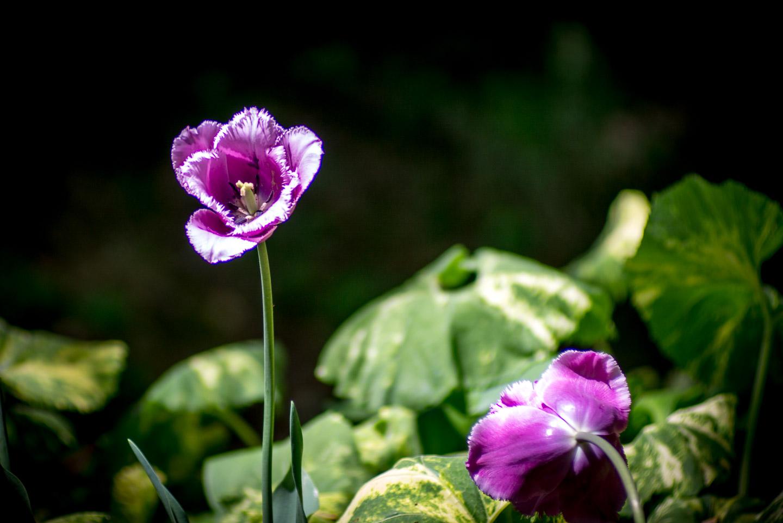 Meadowlark-Botanical-Gardens-20160424-_DSC4669