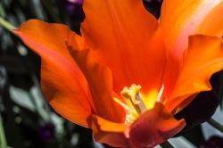 Meadowlark-Botanical-Gardens-20160424-_DSC4765