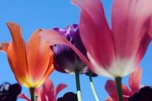 Meadowlark-Botanical-Gardens-20160424-_DSC4768