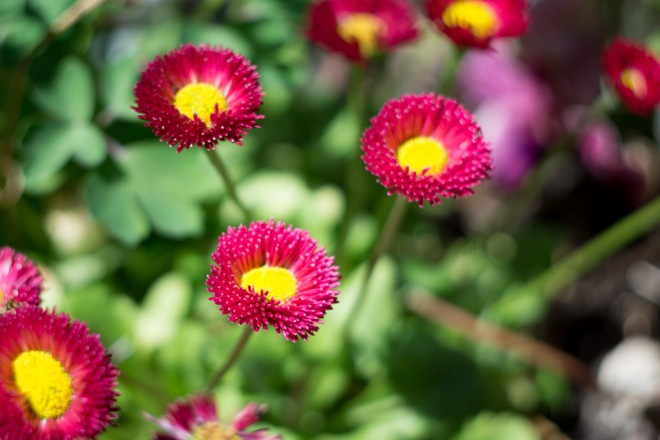 Meadowlark-Botanical-Gardens-20160424-_DSC4793