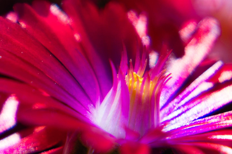 Meadowlark-Botanical-Gardens-20160424-_DSC4882